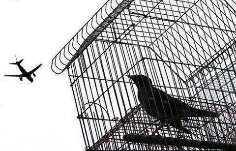 Blackbird singing in the dead of night, Take these broken wings and learn to fly, All your life ~ You were only waiting for this moment to arise.  Blackbird singing in the dead of night, Take these sunken eyes and learn to see, All your life ~ You were only waiting for this moment to be free.