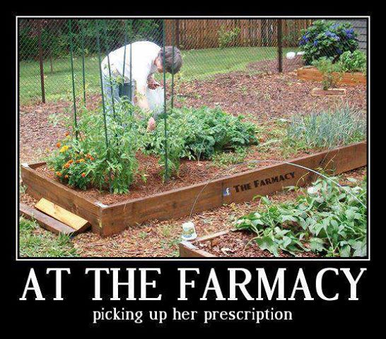 """""""Let food be thy medicine and medicine be thy food.""""  ~ Hippocrates"""