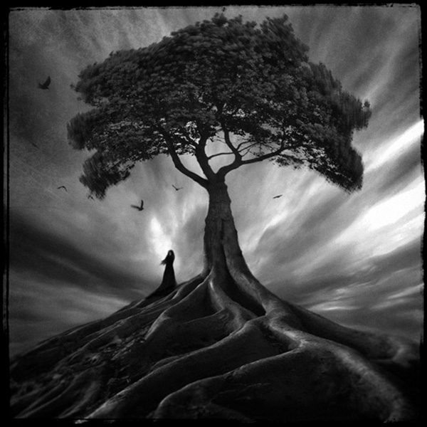 """""""Solitude is the soil in which genius is planted, creativity grows, and legends bloom; faith in oneself is the rain that cultivates a hero to endure the storm, and bare the genesis of a new world, a new forest.""""  ~ Mike Norton, White Mountain"""
