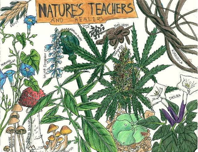 Nature's teachers