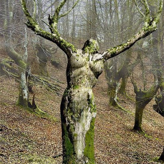 tree woman raised hands