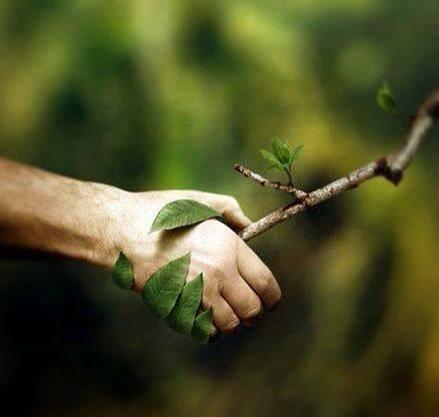 nature cooperation
